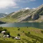 El Parque Nacional de los Picos de Europa,cobrara por la entrada al Parque.